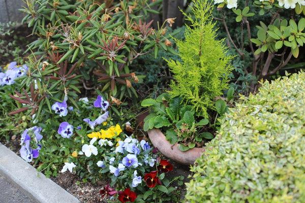お庭づくり・お庭の手入れをさせていただいた川崎市中原区M様邸に訪問しました。
